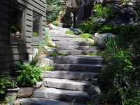 Stairs in a Natural Setting